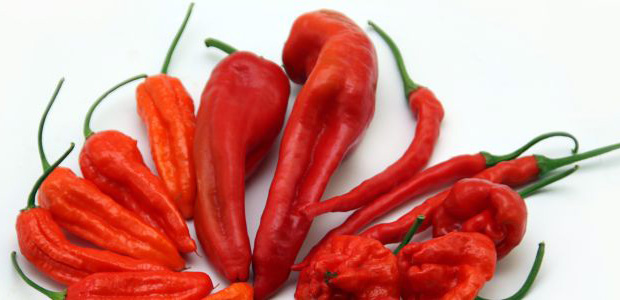 ostra papryczka chilli